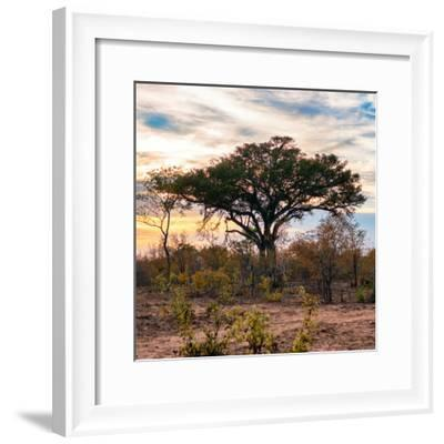 Awesome South Africa Collection Square - Sunrise in Savannah II-Philippe Hugonnard-Framed Photographic Print