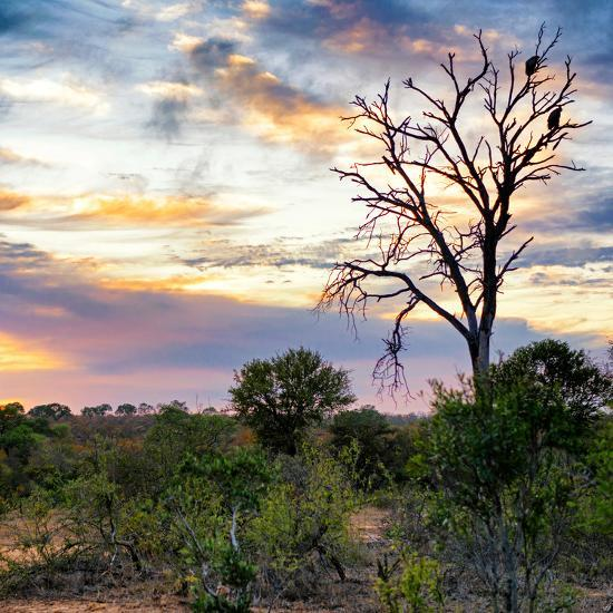 Awesome South Africa Collection Square - Sunrise in Savannah-Philippe Hugonnard-Photographic Print