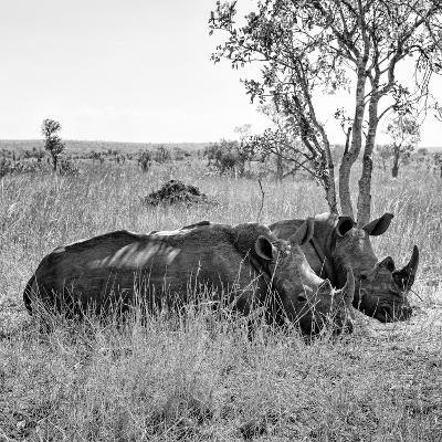 Awesome South Africa Collection Square - Two Rhinoceros sleeping B&W-Philippe Hugonnard-Photographic Print