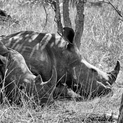Awesome South Africa Collection Square - Two White Rhinos B&W-Philippe Hugonnard-Photographic Print