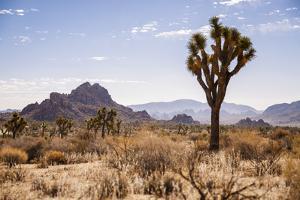 Joshua Tree NP, CA, USA: Single Joshua Tree, Desert & Mts In Bkgd, Park W Entrance by Axel Brunst