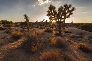 Joshua Tree NP, California, USA: The Typical Park Landscape In The Evening Light At Jumbo Rocks by Axel Brunst