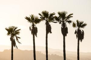 Los Angeles, California, USA: Five Palm Tress In A Row During The Golden Hour Just Before Sunset by Axel Brunst