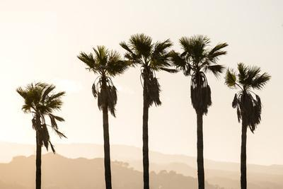 Los Angeles, California, USA: Five Palm Tress In A Row During The Golden Hour Just Before Sunset