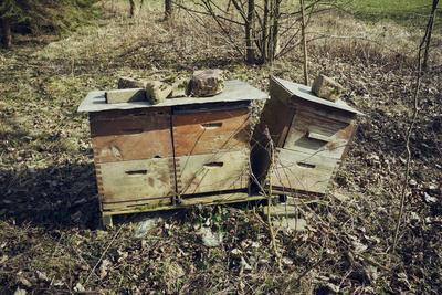 Three bee boxes at the edge of aforest on a meadow with sun in autumn
