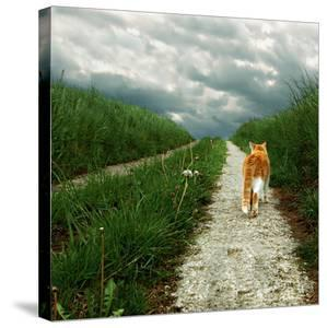 Lone Red and White Cat Walking along Grassy Path by Axel Lauerer