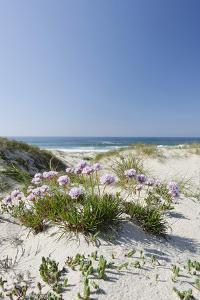 Sand Dunes, Dune Vegetation, Portuguese Atlantic Coast, Praia D'El Rey, Province Obidos, Portugal by Axel Schmies
