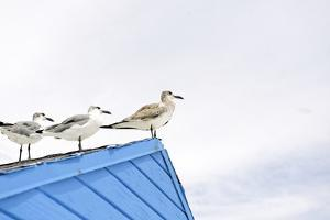 Seagulls on Roof of Kiosk by Axel Schmies