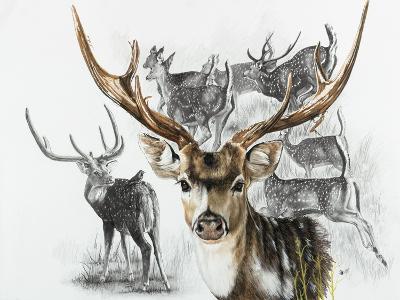 Axis Deer-Barbara Keith-Giclee Print