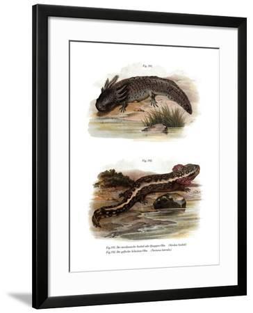 Axolotl--Framed Giclee Print