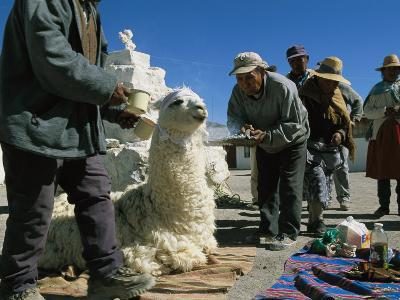 Aymara Indians Prepare to Sacrifice a Llama in Offering to Pacha Mama-Joel Sartore-Photographic Print
