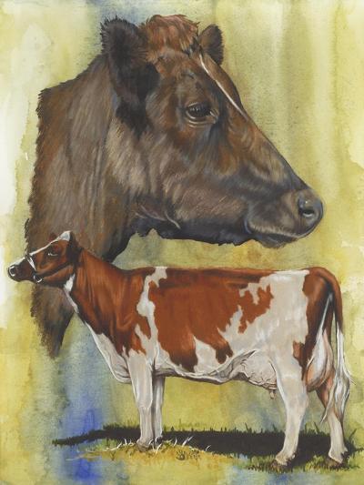 Ayrshire Cows-Barbara Keith-Giclee Print
