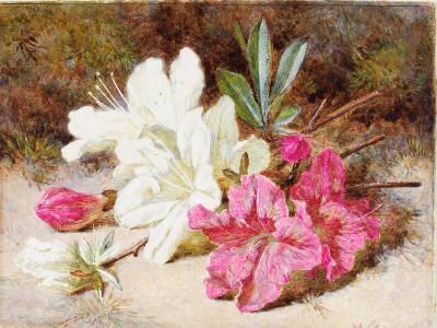 Azalea Bloom, C.1865-74-Helen Cordelia Coleman Angell-Giclee Print