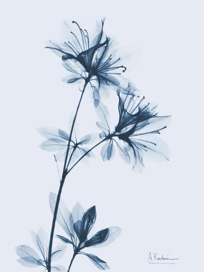 Azalea in Blue-Albert Koetsier-Art Print