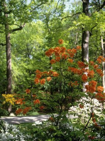 https://imgc.artprintimages.com/img/print/azalea-way-botanical-gardens-bronx-ny_u-l-p4vdqg0.jpg?p=0