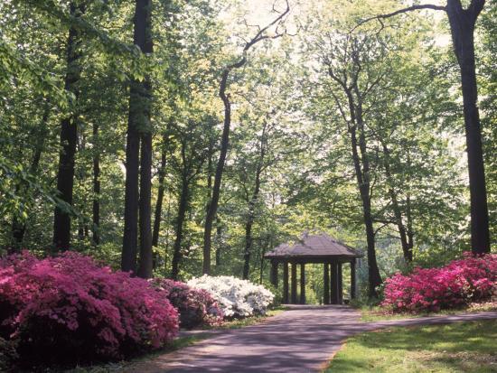 Azalea Way, Botanical Gardens, Bronx, NY-Lauree Feldman-Photographic Print