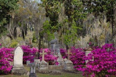 Azaleas and Headstones in Bonaventure Cemetery, Savannah, Georgia, USA-Joanne Wells-Photographic Print