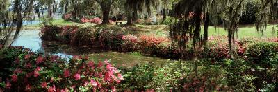 Azaleas and Willow Trees in a Park, Charleston, Charleston County, South Carolina, USA--Photographic Print