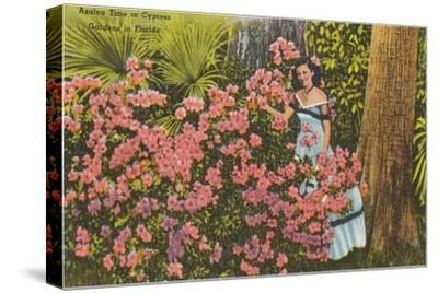 Azaleas, Cypress Gardens, Florida