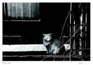 Untitled - Cat by B^ A^ King