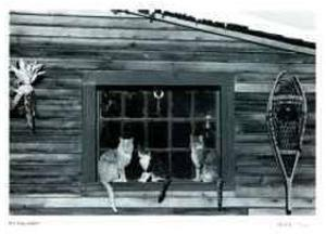 Untitled - Cats in Window by B^ A^ King