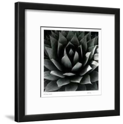 Untitled - Plant