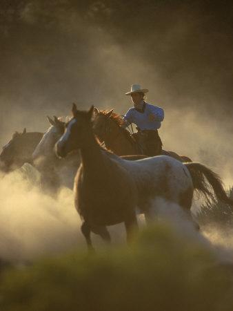 Cowgirl Rounding-Up Wild Horses, OR