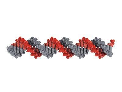 B-DNA Molecule-Visual Science-Photographic Print