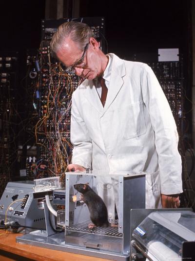 "B. Frederic Skinner at Harvard Training Rat in ""Skinner Box"" to Press Lever and Be Rewarded-Nina Leen-Premium Photographic Print"