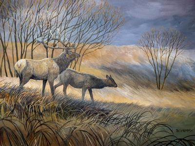 Elk Journey I