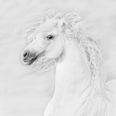 B&W Horses III-PHBurchett-Photographic Print