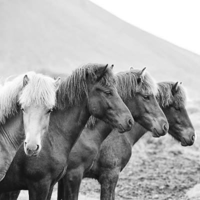 B&W Horses IX-PHBurchett-Photographic Print