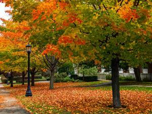 Colorful Sugar Maple Trees in Autumn Hues on the Grounds of Bates College by Babak Tafreshi