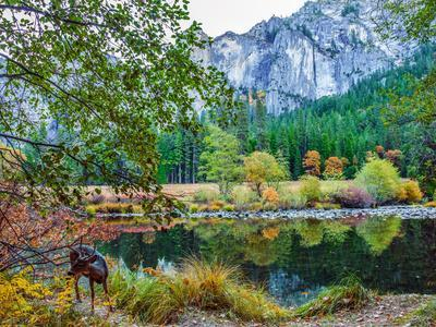 Colorful Trees, Rugged Mountains and a Browsing Deer in a Scenic Autumn Landscape