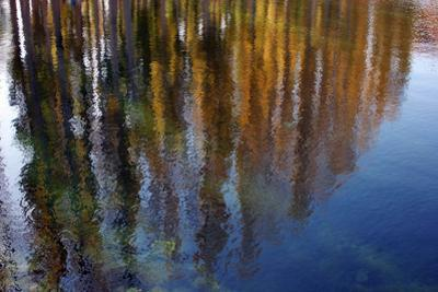 Colors of Fall Leaves are Reflected in the Surface of a Pond by Babak Tafreshi
