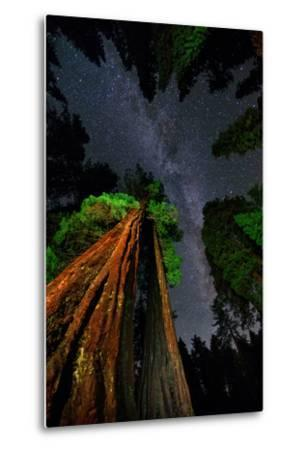 The Milky Way Above Towering Giant Sequoia Trees, Some of the Largest and Tallest Trees on Earth