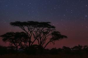 The Night Sky at the Beginning of Dawn over Silhouetted Acacia Trees by Babak Tafreshi