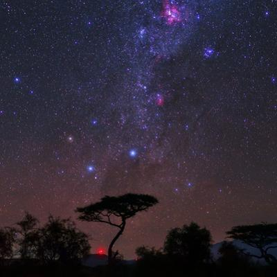 The Southern Cross and Milky Way over a Tree. the Carina Nebula Is the Red Cloud at Top by Babak Tafreshi
