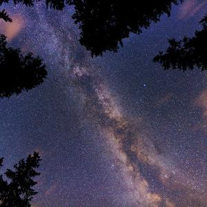 The Summer Milky Way and Stars Above Silhouetted Evergreen Trees by Babak Tafreshi