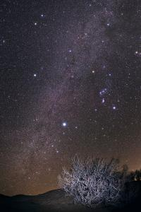 The Winter Milky Way, Constellations Orion, Gemini, Canis Major and Canis Minor over a Tamarisk by Babak Tafreshi