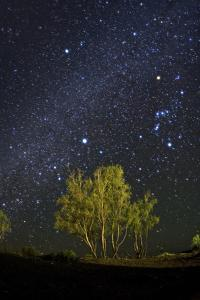 The Winter Milky Way, Sirius, and Orion in a Starry Desert Sky over Tamarisk or Salt Cedar Trees by Babak Tafreshi