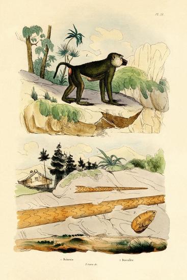 Baboon, 1833-39--Giclee Print