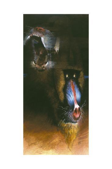 Baboon Scream-Durwood Coffey-Giclee Print
