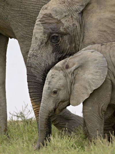 Baby and Young African Elephant, Addo Elephant National Park-James Hager-Photographic Print