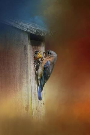 Baby Bluebird Breakfast-Jai Johnson-Giclee Print