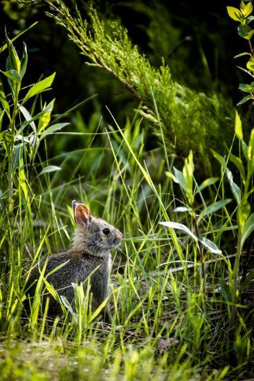 Baby Bunny I-Beth Wold-Photographic Print