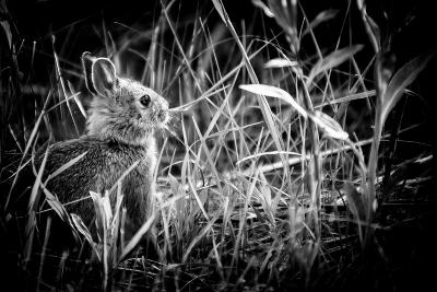 Baby Bunny II-Beth Wold-Photographic Print