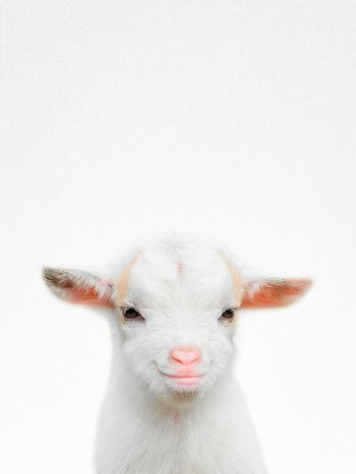 Baby Goat-Tai Prints-Photographic Print