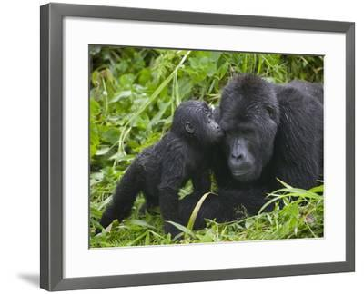 print Gorilla Kiss