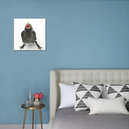 Stupendous Baby Jackdaw Corvus Monedula Gaping To Be Fed Photographic Print By Mark Taylor Art Com Gamerscity Chair Design For Home Gamerscityorg